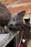 De aantrekkingskracht van de kat Stock Fotografie