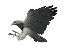 De aanval van de adelaar Royalty-vrije Stock Foto's