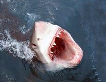 De aanval van de haai Stock Foto
