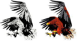 De aanval van Eagle Royalty-vrije Stock Foto's