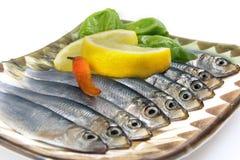 De aanzet van vissen Royalty-vrije Stock Fotografie