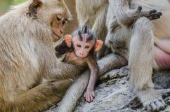 De aap Stock Foto's