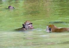 De aap baadt in het water Royalty-vrije Stock Foto's
