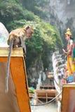 De aap in Batu holt Hindoese tempel uit Gombak, Selangor maleisië stock foto's