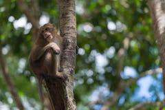 De aap beklimt de boom Royalty-vrije Stock Afbeeldingen