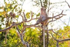 De aap beklimt op boom selectieve nadruk in aard stock foto's