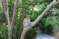 De aap is een pret Royalty-vrije Stock Afbeelding