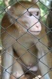 De aap is een pret Stock Afbeeldingen