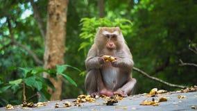 De aap eet een banaan en kijkt rond in verrassing wilde aard, de natuurlijke habitat van apen stock videobeelden