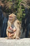 De aap en de baby van de moeder royalty-vrije stock foto