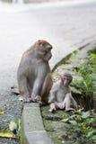 De aap en de moeder van de baby stock fotografie