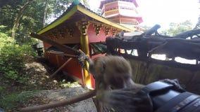 De aap onderzoekt de cameralens stock videobeelden