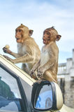 De aap op de auto eet thailand Royalty-vrije Stock Foto's
