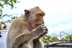 De aap op de auto eet Thailand Stock Foto's