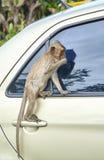 De aap op de auto eet Thailand Stock Afbeeldingen