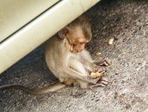 De aap op de auto eet Thailand Royalty-vrije Stock Foto