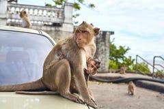 De aap op de auto is, Thailand Stock Foto's