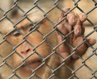 De aap is opgesloten royalty-vrije stock afbeelding