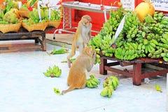 De aap in Popa Taungkalat Shrine, zet Popa, Myanmar op stock foto