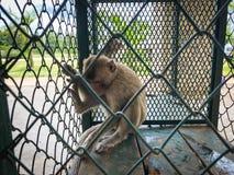 De aap toont in de kooi wachtend op een lichaamscontrole Royalty-vrije Stock Fotografie