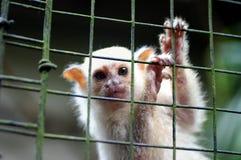 De aap van de baby stock afbeelding