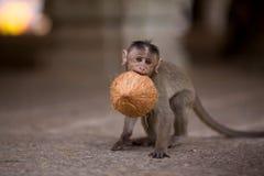 De aap van de baby Royalty-vrije Stock Afbeelding