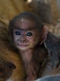 De aap van de baby Royalty-vrije Stock Foto's