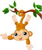 De aap van de baby op boom het tonen Royalty-vrije Stock Foto's