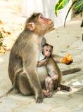 De aap van de moeder en van de baby Royalty-vrije Stock Afbeelding