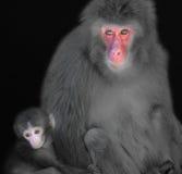 De aap van de moeder en van de baby royalty-vrije stock foto's
