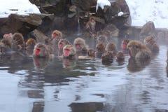 De aap van de sneeuw Stock Fotografie