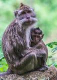 De aap van de moeder en haar baby Royalty-vrije Stock Afbeelding