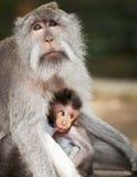 De aap voedt haar welp Dieren - moeder en kind stock foto