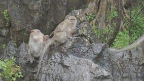 De aap zit en eet op rots bij de Rotspark van Khao Ngoo, Ratchaburi, Thailand stock videobeelden