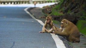 De aap zit op de weg in het park Azië, tropisch bos, nationaal park stock videobeelden