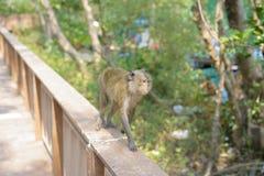 De aap zoekt iets royalty-vrije stock afbeeldingen