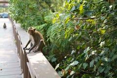 De aap zoekt iets stock foto