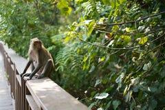 De aap zoekt iets royalty-vrije stock afbeelding