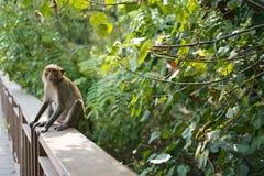 De aap zoekt iets royalty-vrije stock fotografie
