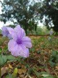 De aard, bloemen, behang bloeit, mooie aard, sunrises, goedemorgen, mooie aard stock afbeelding