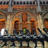 De aard ontmoet architectuur Stock Foto's