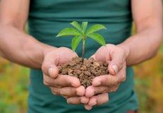 De aard plant in hand holdindconcepten stock foto