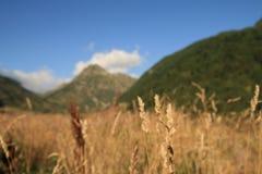 De aard van Andorra in de herfst stock foto