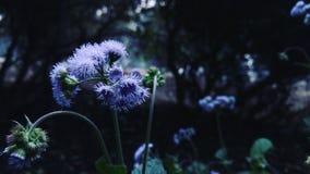 De aard van bloemen Stock Afbeeldingen