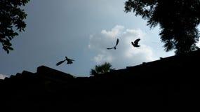 de aard van de daglichthemel en vliegende vogels Stock Afbeeldingen