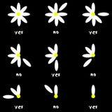 De aard van de bloemliefde verwijdert ja geen madeliefje stock illustratie