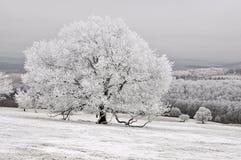 De aard van de de winterboom Stock Afbeelding