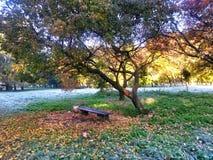De aard van de herfst Lange schaduwen en blauwe hemel stock foto's