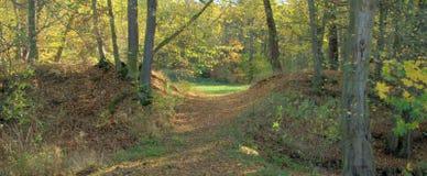 De aard van de herfst Lange schaduwen en blauwe hemel Royalty-vrije Stock Afbeelding