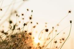 De aard van de herfst Lange schaduwen en blauwe hemel stock afbeeldingen
